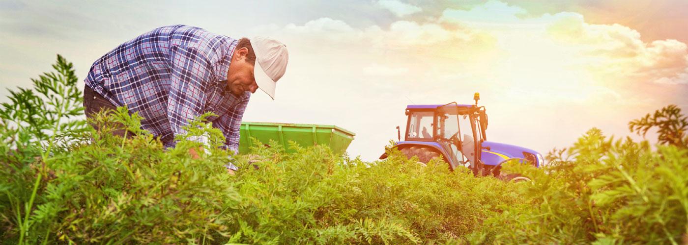 agricoltura-BRC-slider